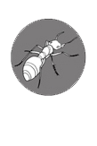 Termite Resistant